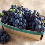 Seasonal Eats: Concord Grapes